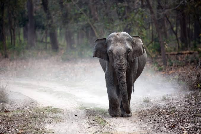उत्तराखंड : राज्य में बनेगा हाथियों का पहला अस्पताल, हर किस्म की बीमारी का होगा इलाज