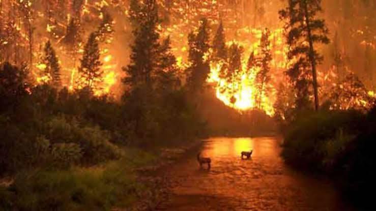 Uttarakhand जंगलों में भीषण आग, कारण जान मंत्री, अधिकारी से बॉलीवुड तक हैरान, चौंक जाओगे आप भी